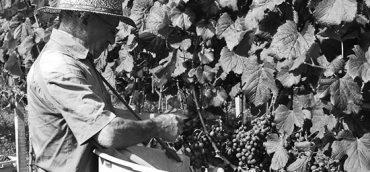 A História do Vinho no Brasil